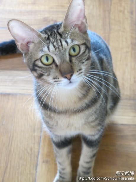猫咪情侣头像一对两张